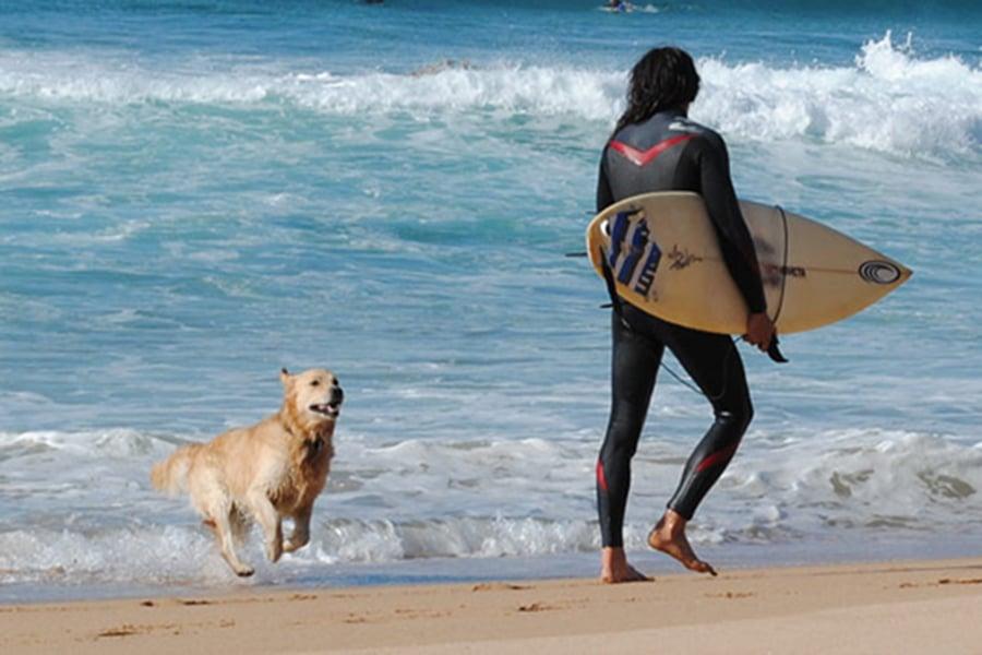 dog on beach - SEA BREEZE